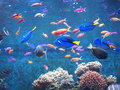 fish - Fish wallpaper