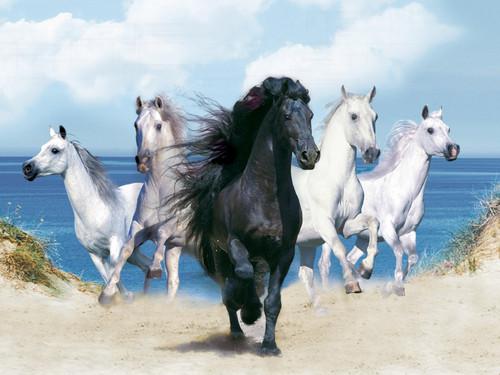घोड़े वॉलपेपर entitled Galloping on the समुद्र तट
