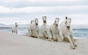 Galloping on the beach, pwani