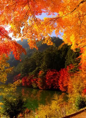 Gate To Autumn