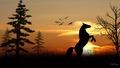 Horse in the Sunrise - horses wallpaper