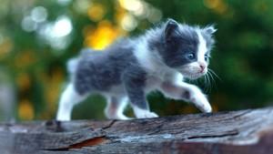 Kitten बिल्ली 40689867