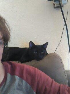 My Vader watching me FB