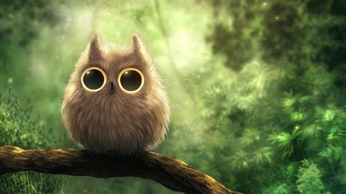 Owls fond d'écran titled Owl