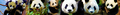 Pandas banner suggestion - pandas fan art