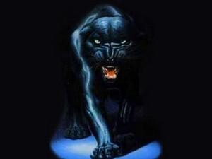 panther, harimau kumbang