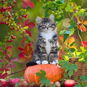 Pretty Autumn Cat ♥