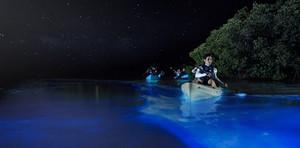 Puerto zanzara Bioluminescent baia