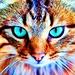 Spot Icon Re-Do - cats icon