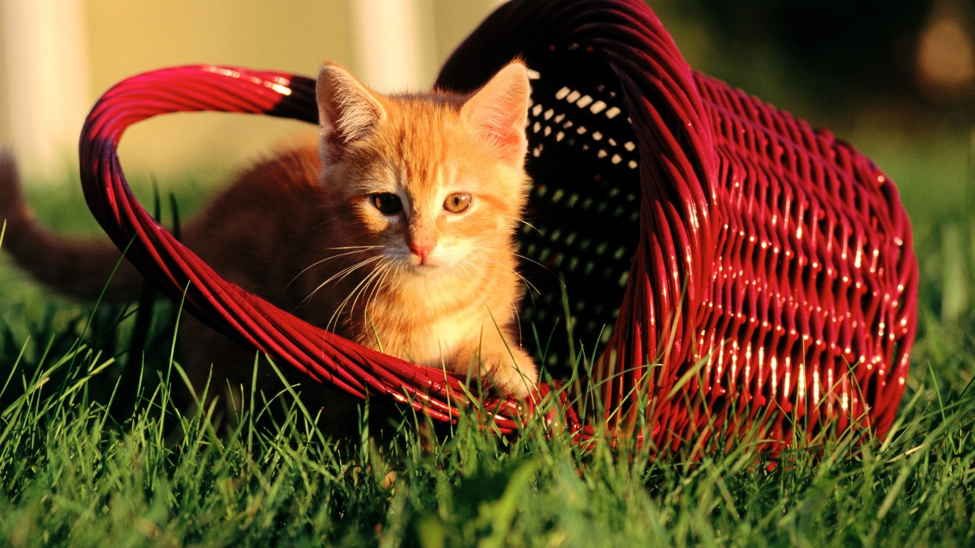 Cats Images Sweet Cat Hd Wallpaper And Background Photos 40609253