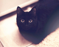 That face! - black-cats photo