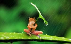 木, ツリー Frog