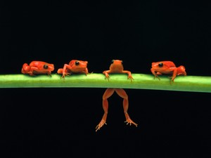 arbre Frogs