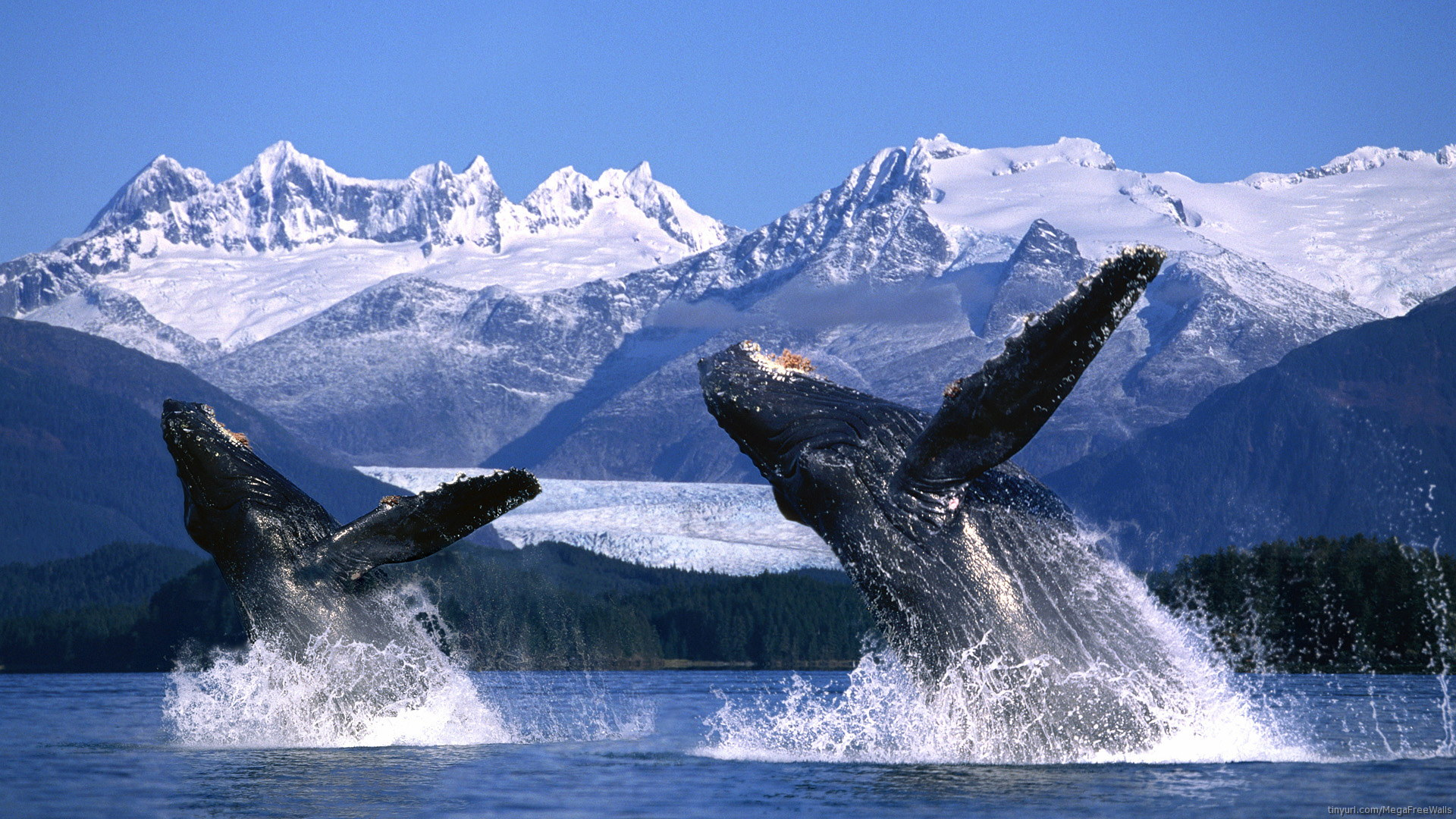 Whales Images HD Wallpaper And Background Photos