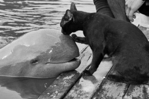 cat and baby beluga walvis