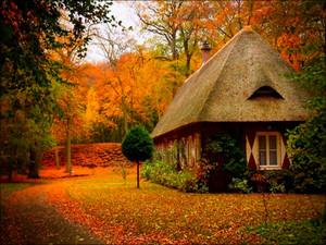 Autumn autumn 32300223 800 600