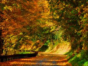 Autumn autumn 32320331