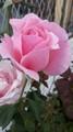 1505972914076 - flowers photo