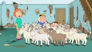 16.03 - Nanny Goats