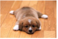 42897q324896324789386.PNG - puppies photo