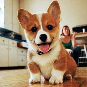 461366 dogs happy dog