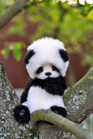 86550d67399c902bafeebc4495c255ef  baby panda bears panda babies