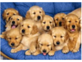 943073489768934.PNG - puppies photo
