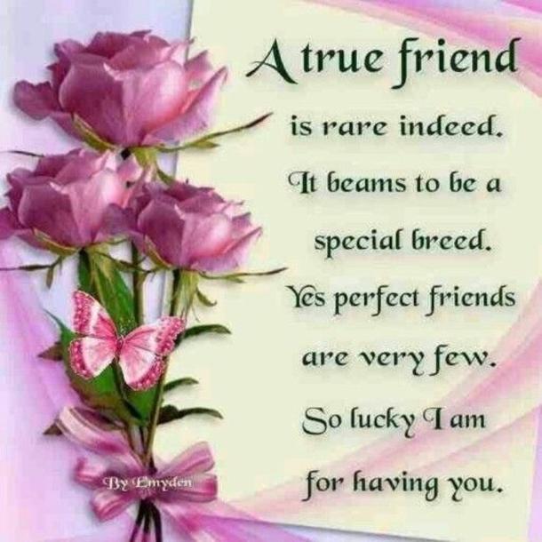 A True Friend ♥