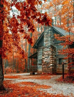 Autumn autumn 40568161 650 850