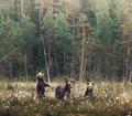 Bears - animals photo