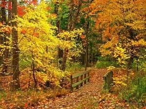 Beautiful Fall fondo de pantalla autumn 15496213 1024 768