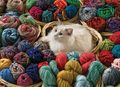 Cat Playing With Yarn - cats photo