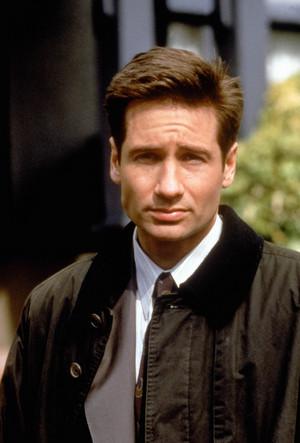 狐狸 Mulder
