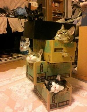 LOOOOL ネコ