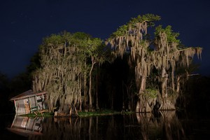 Manchac Swamp, Louisiana, USA