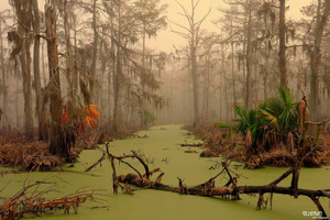 Manchac Swamp, Louisiana