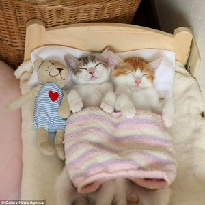 Nap Time For Kitties