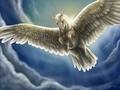 Pegasus - fantasy wallpaper