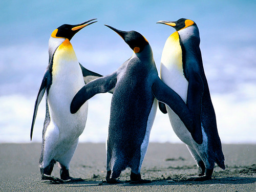 Roblox achtergrond called Penguins