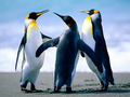 Penguins - roblox photo