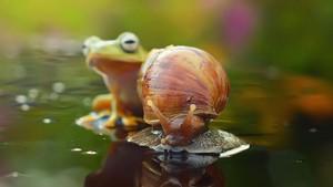 달팽이 and Frog