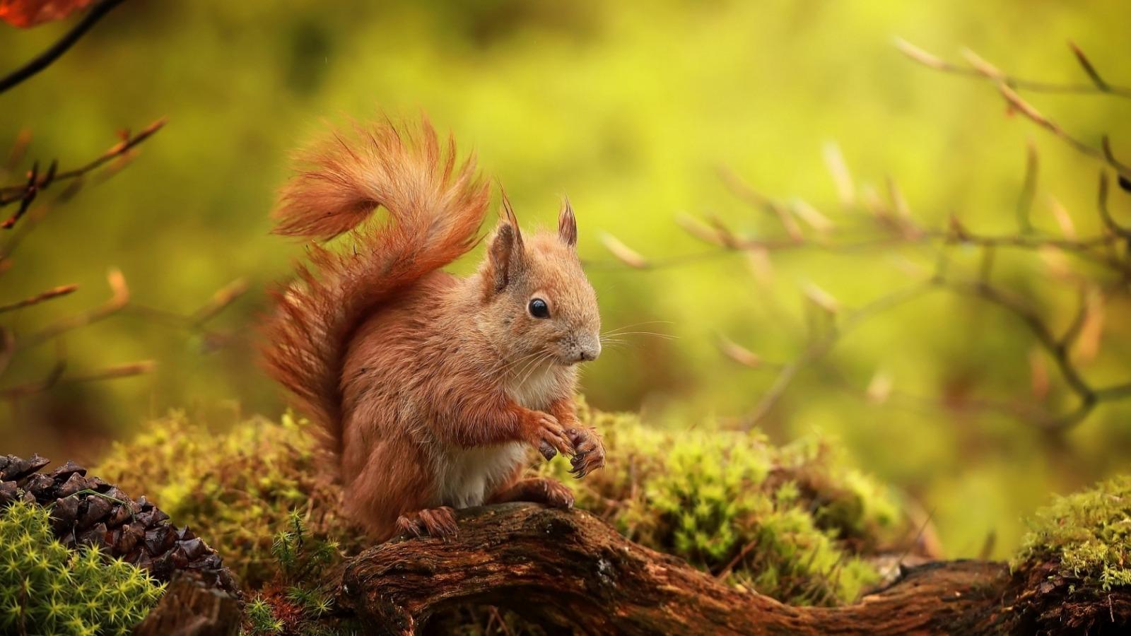 动物images 松鼠 hd wallpaper and background photos
