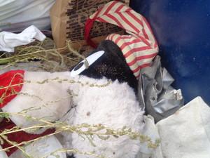 Sylvester cat trash