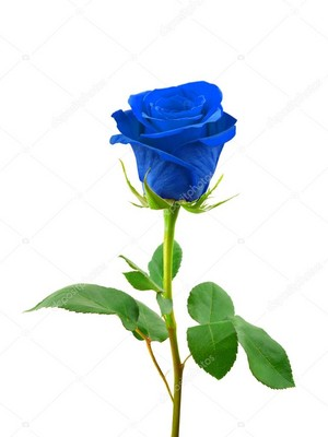 True Blue - A Blue Rose For wewe