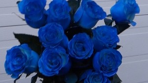 True Blue - Blue roses For toi