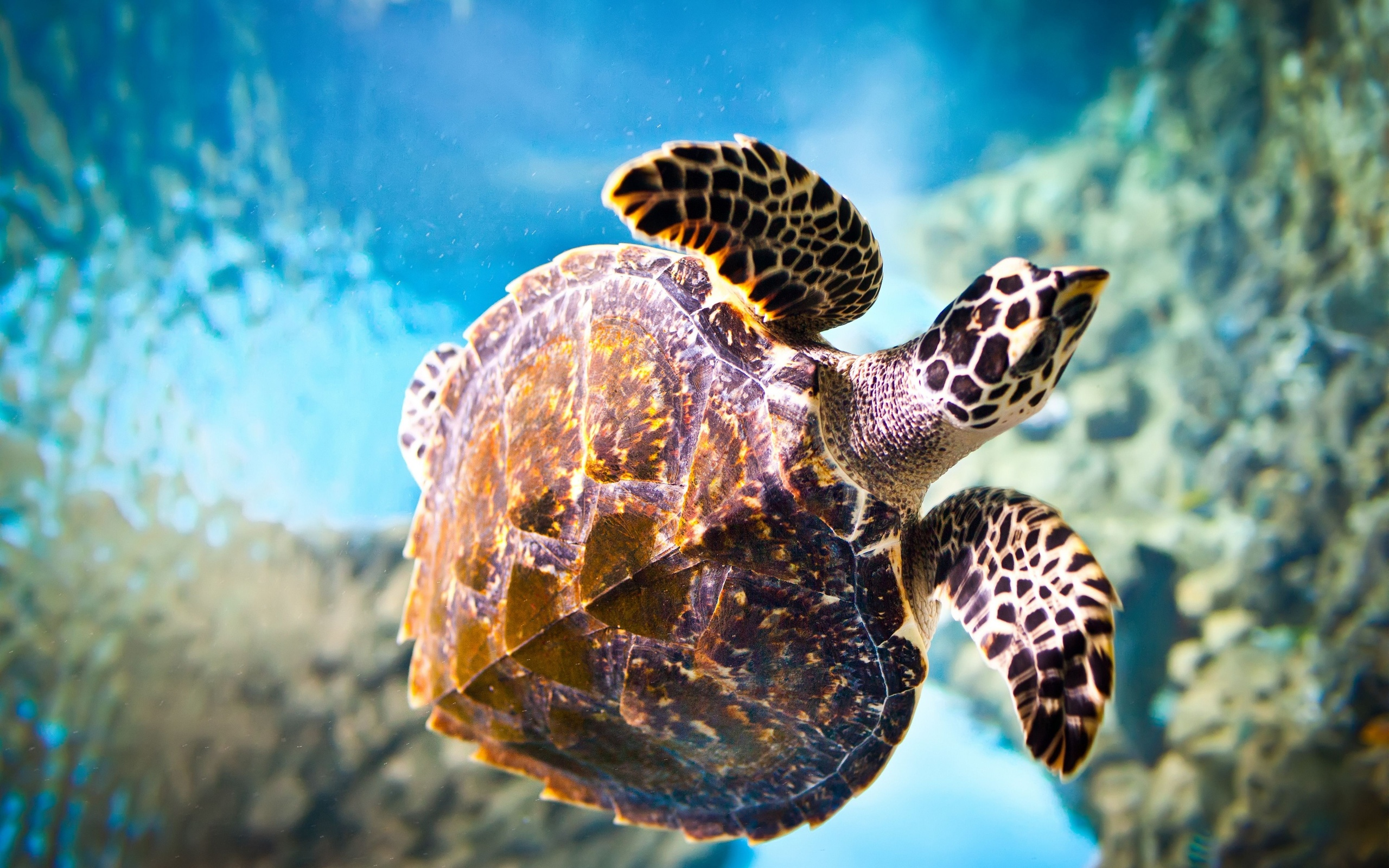 Turtles Images Turtle Hd Wallpaper And Background Photos
