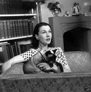 Vivien Leigh And Her Cat