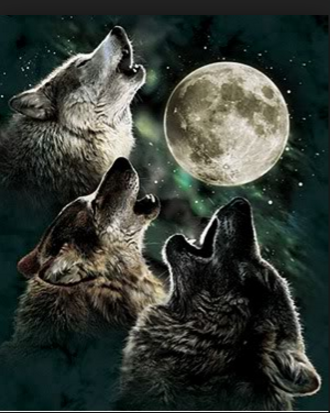 WolfHowl01