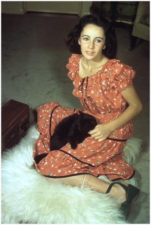 Elizabeth Taylor And Her Kitten