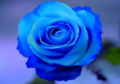 roselline.PNG - luthorlex photo